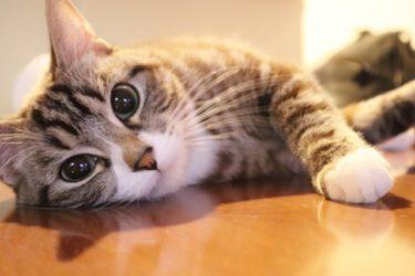 演技において猫背直せってよく言われるけど、猫背も役者の武器にはなるんやで!